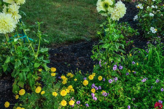 gs-seasonalflowers-2a