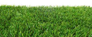 zoysiagrass